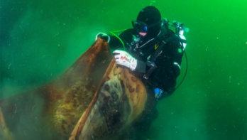Noorwegen wordt toch Duik de Noordzee Schoon