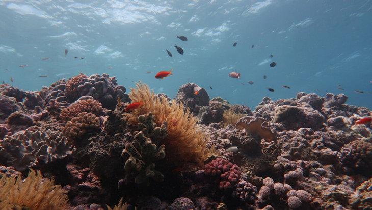 Great Barrier Reef is in 30 jaar tijd de helft van het koraal kwijtgeraakt