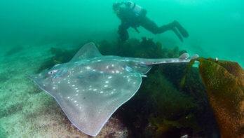 Is de Noordzee klaar voor terugkeer van de vleet?