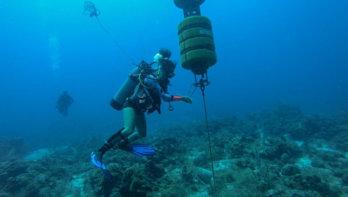 Gebruik van geluid voor bestuderen zeezoogdieren op de Sababank