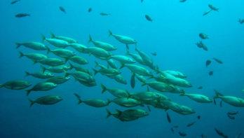Een vissenschool kan door ons toedoen weleens snel verleden tijd zijn