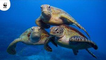 Ghost Gear: Verloren vistuig dodelijkste vorm van plastic afval voor zeedieren