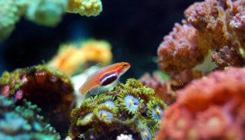 koraalrif ontdekt