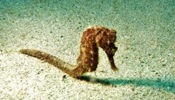 Rebel Diving