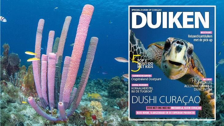 Lees gratis de digitale special DUIKEN op Curaçao