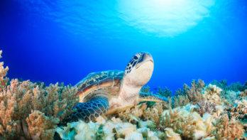Flying Vets: zeedieren redden in Indonesië
