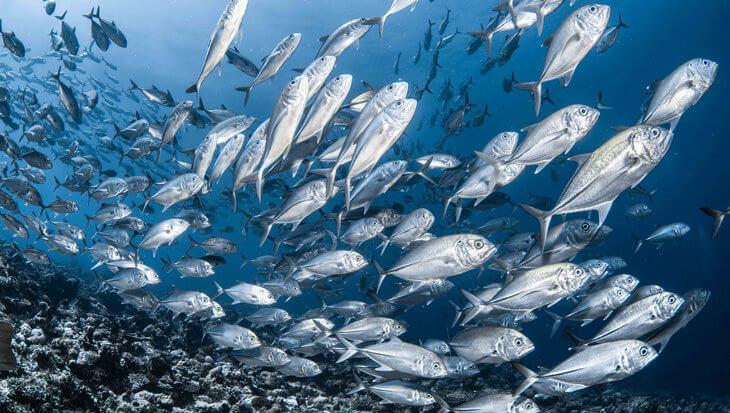 Doe je mee? Fish Free February