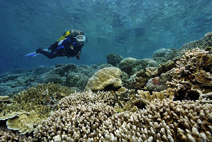 Lumbalumba Diving