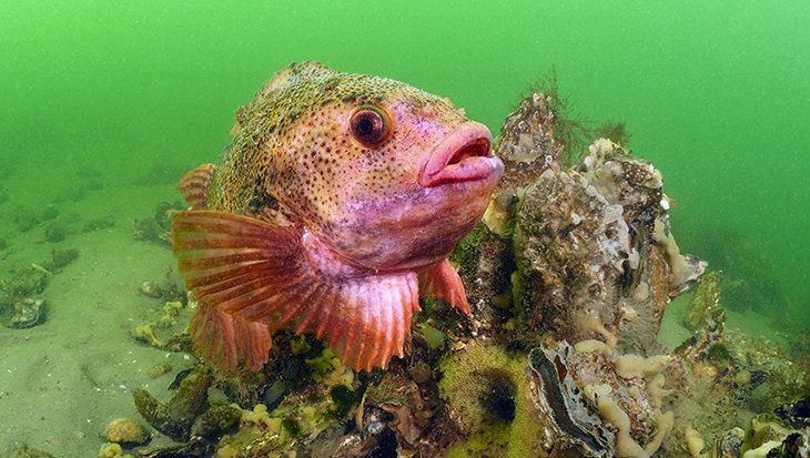 Snotolf: Speeddating onder water