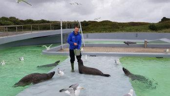 Ecomare Texel: bijzondere zwarte zeehond in de opvang