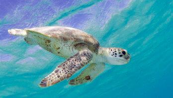 Van Karpata naar Tolo, driftduiken langs 5 duikspots op Bonaire