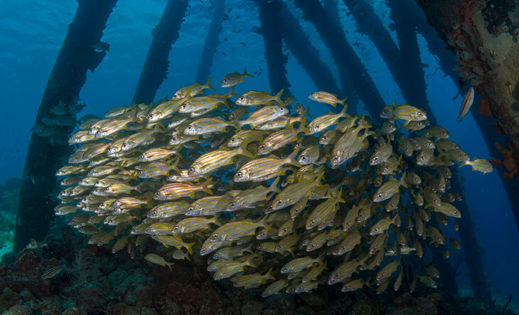 Zoutpier Bonaire