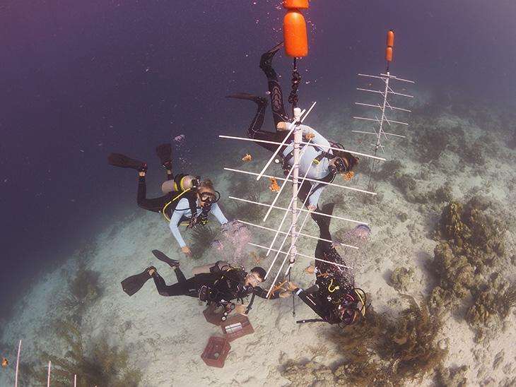 Reef Renewal Foundation