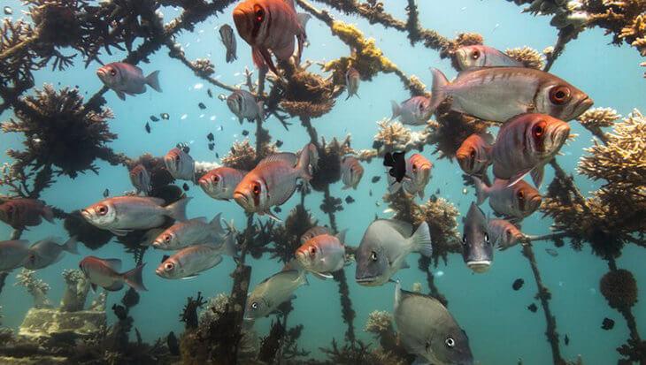 Duikers bouwen nieuw koraalrif in Kenia