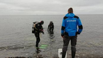 Zeepaardjes uit opvang Ecomare terug naar zee