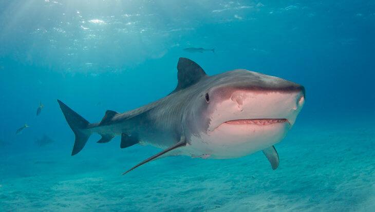 Hoe is het nu met… Blue Ocean Dive Resort?