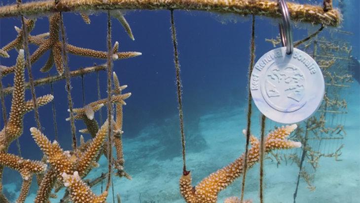 Sleutelhanger van gerecycled plastic helpt koraalriffen herstellen