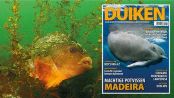 DUIKEN JULI UITGAVE: Madeira, bescherming voor walvissen