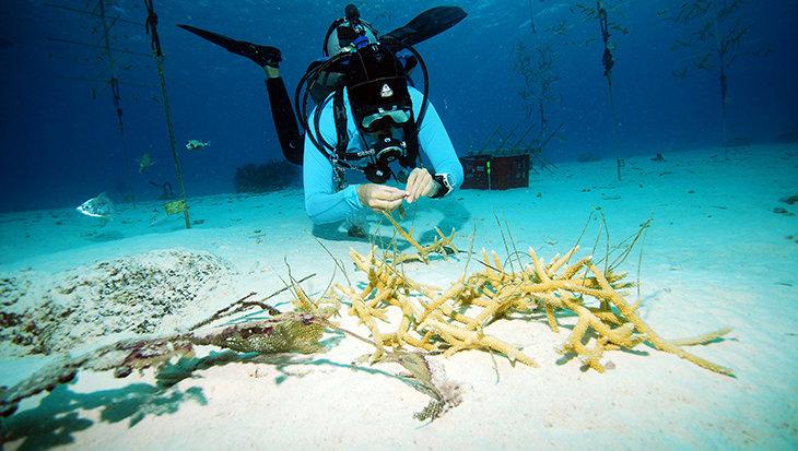 Italiaanse Fransesca Virdis oceaanheld van Bonairiaans rif