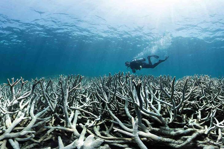 koraalridden