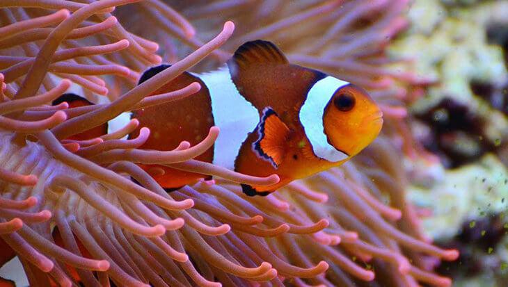 Koraalvissen blijken supersnelle babyvissen te hebben