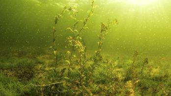 Zoekactie Marine naar vermiste duiker Vinkeveen, eiland 4 opnieuw gesloten