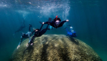 Breedste koraal ooit ontdekt in het Great Barrier Reef