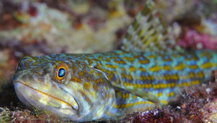 Ontdek de 85 duikplekken op Bonaire