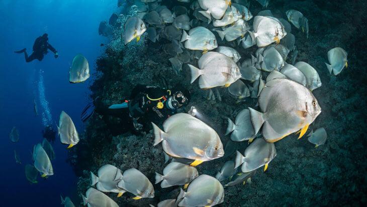 Mis jij een van je fundamentele duikvaardigheden?