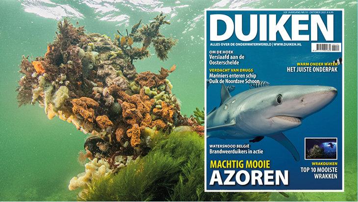 DUIKEN OKTOBER: Machtig mooie Azoren!